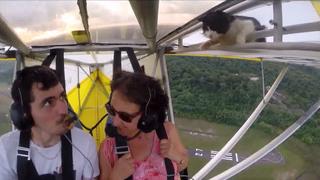 飛行機 猫 動画